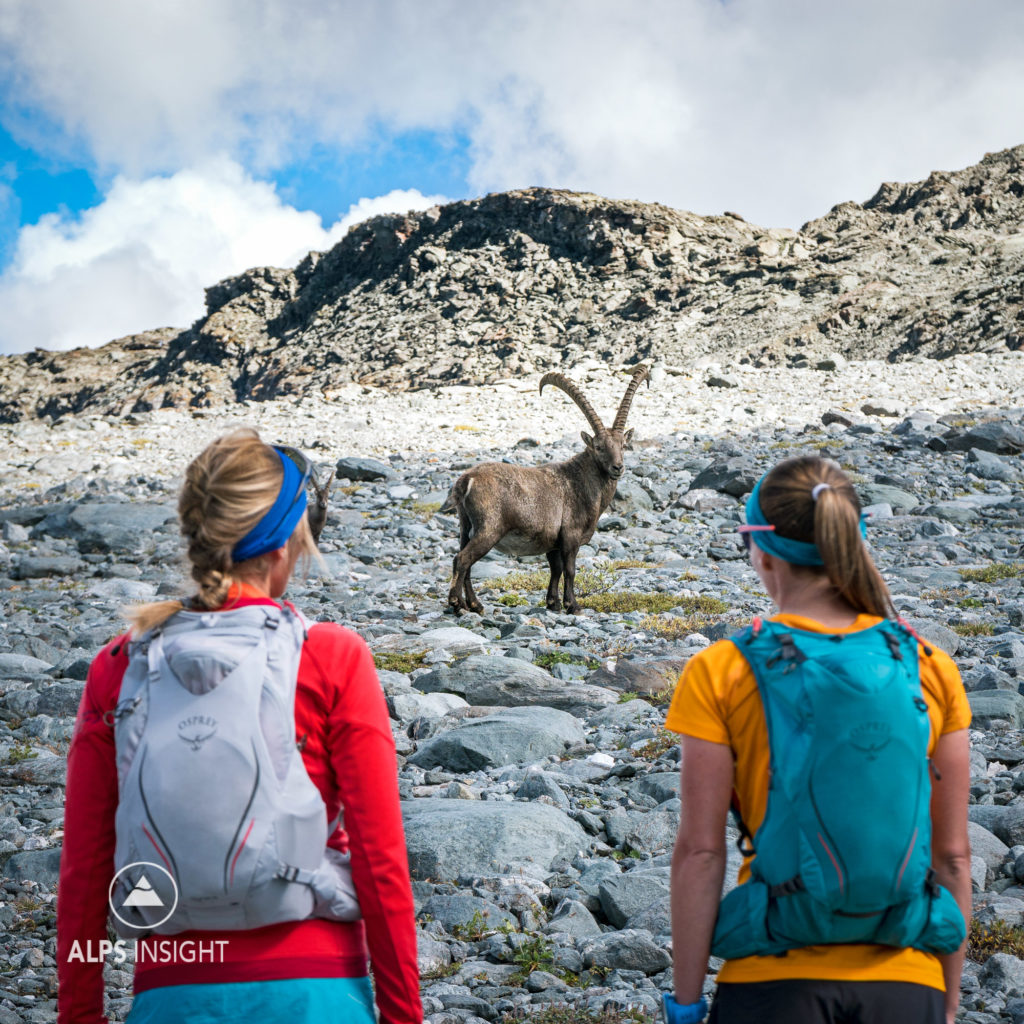 Two women looking at an ibex while running the Via Valais, a multi-day trail running tour connecting Verbier with Zermatt, Switzerland.